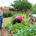Farmers Branch Community Garden at Chapel Hill UMC